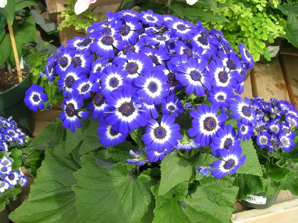 Flor de interior