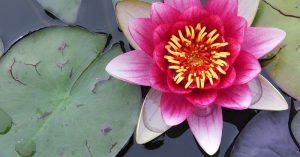 Flores estanques