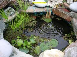 estanque 2