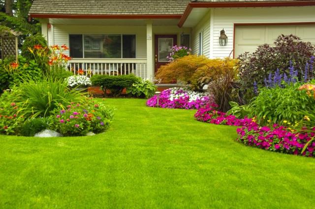 Cuidados de jardin en invierno. Cuidad Vegetal