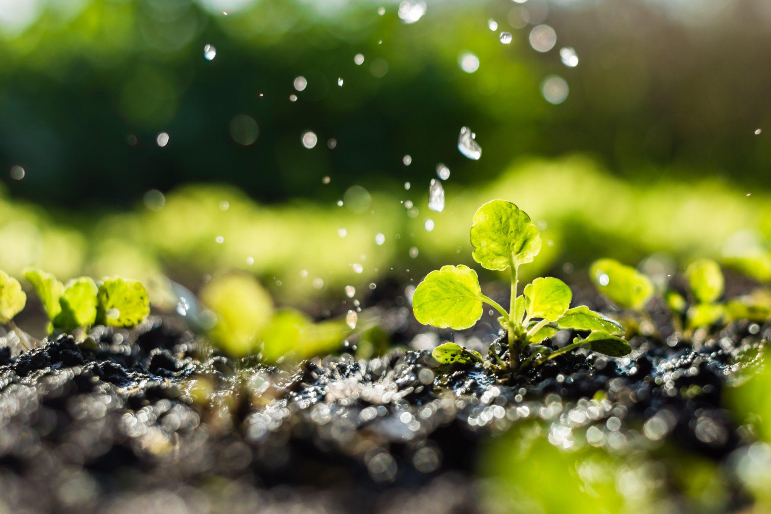Drenaje y aprovechamiento del agua en un jardín